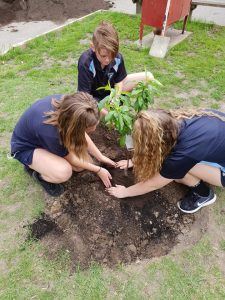 students tree planting 225x300 - Contact Us